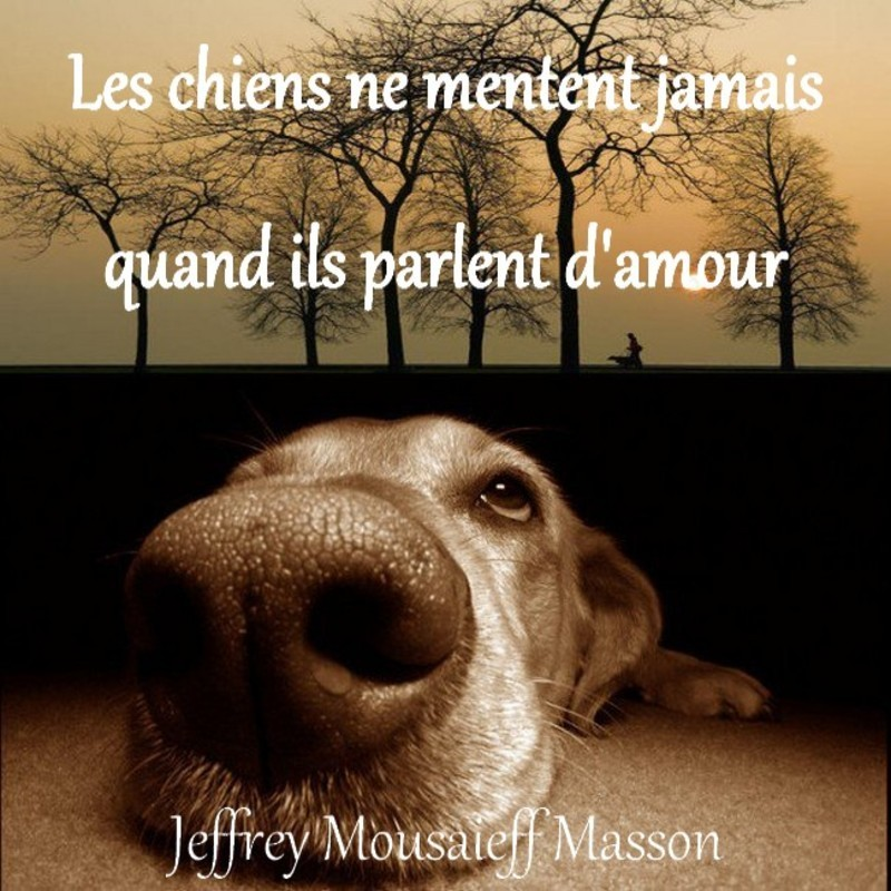 citations sur le chien Chien-11