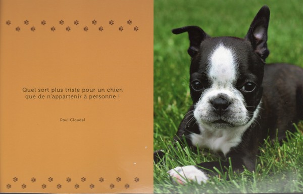 citations sur le chien E27b8610