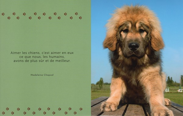 citations sur le chien F1ad8a10
