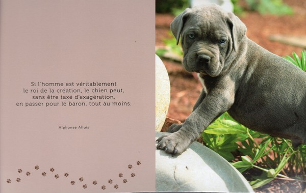 citations sur le chien F6fe6b10