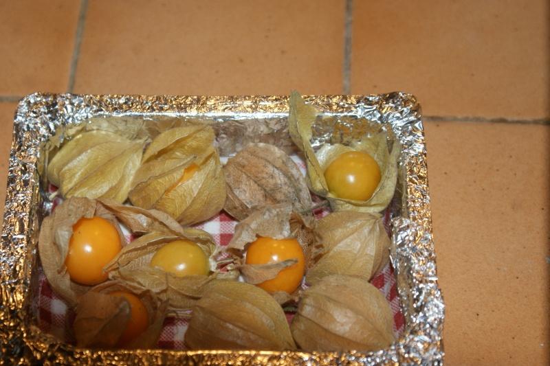 Physalis comestible : Coqueret du Pérou  Physal10