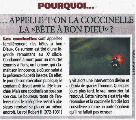 Coccinelle. - Page 2 10419910