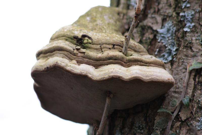 Les champignons 2012_045