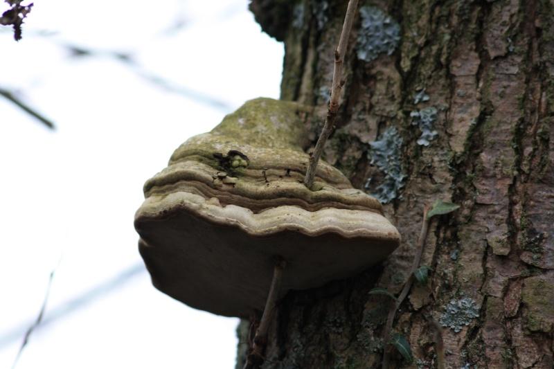 Les champignons 2012_046