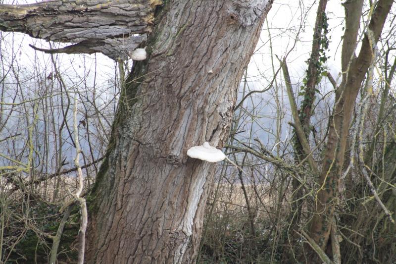 Les champignons 2012_047