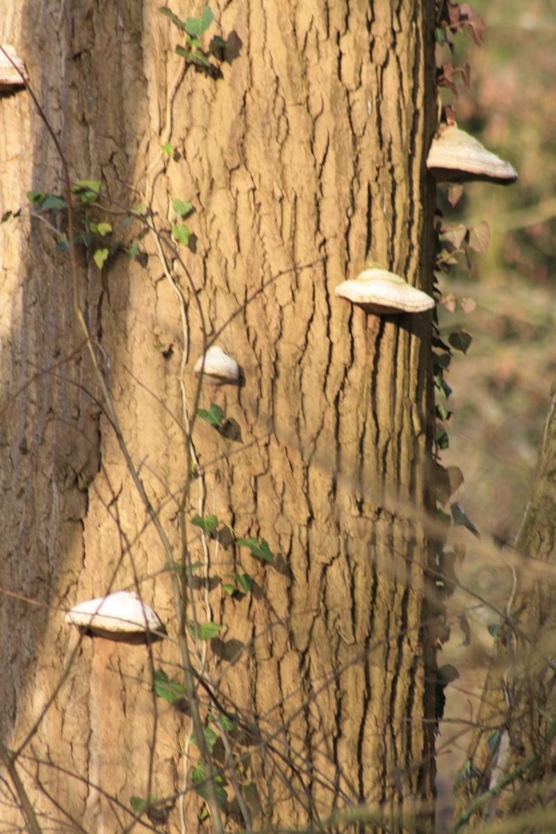 Les champignons 2012_048
