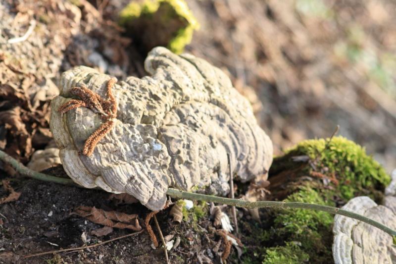 Les champignons 2013_010