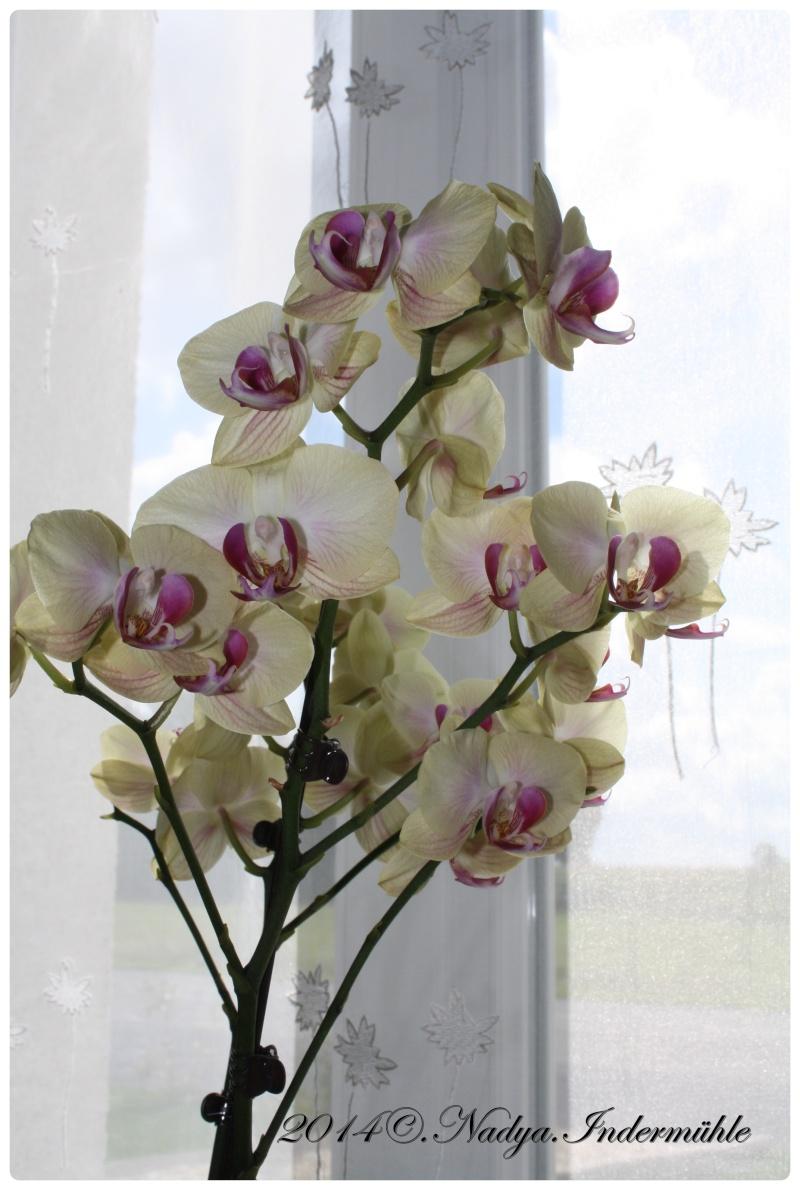 Les Orchidées - Page 2 Cadre264