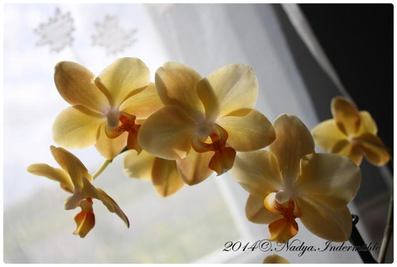 Les Orchidées - Page 2 Cadre268