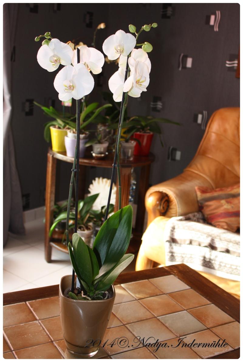 Les Orchidées - Page 2 Cadre293