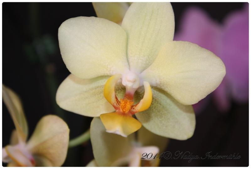 Les Orchidées Cadre301