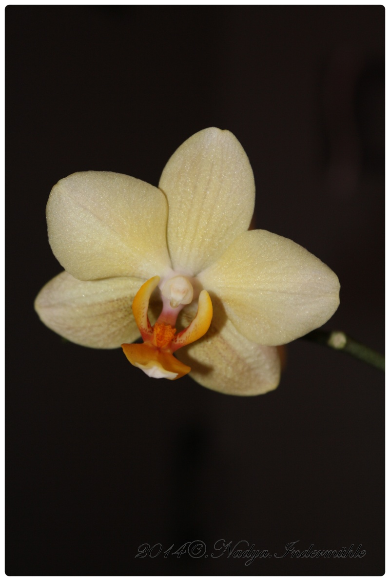 Les Orchidées Cadre303