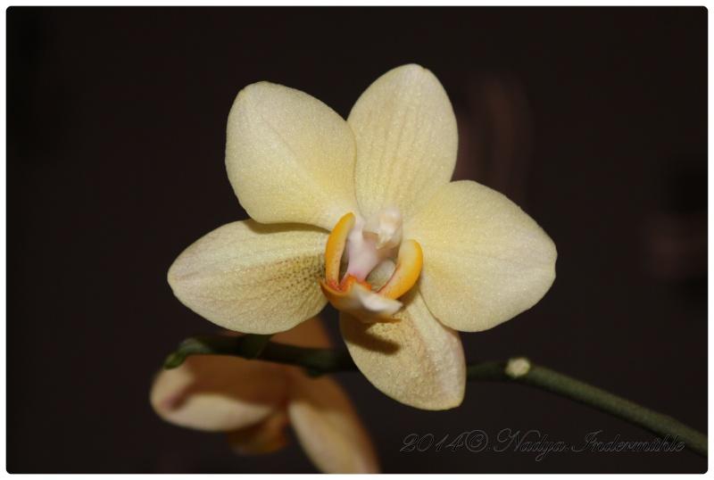 Les Orchidées Cadre304