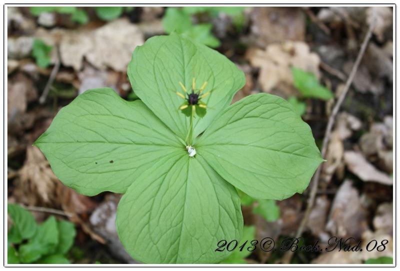 Parissette a 4 feuilles Cadre352