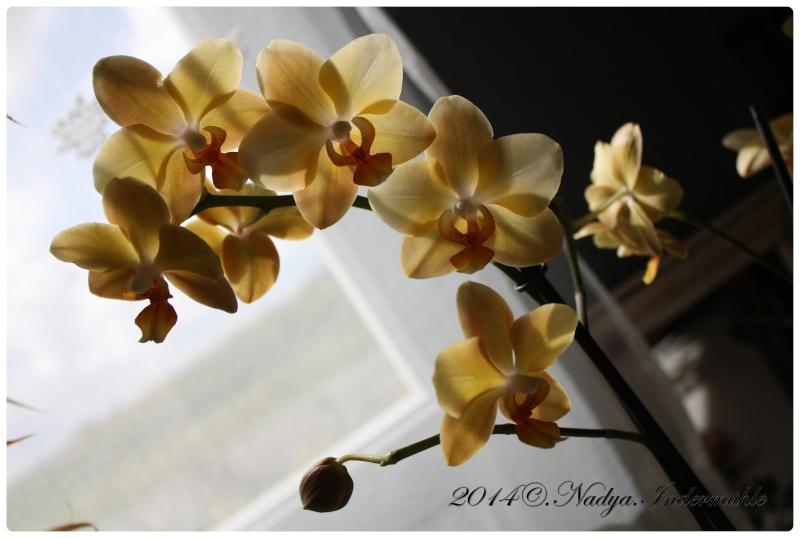 Les Orchidées - Page 2 Cadrer10