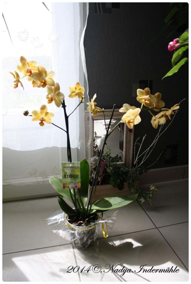 Les Orchidées - Page 3 Cadrer11