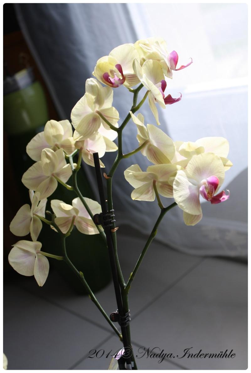 Les Orchidées - Page 2 Cadrer23