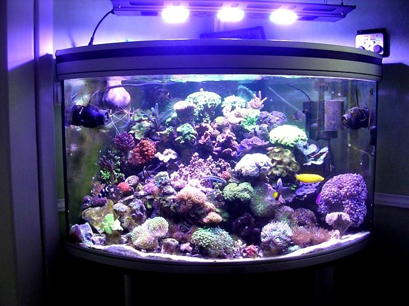 Trombinoscope des bacs en eau de mer Dscn1610