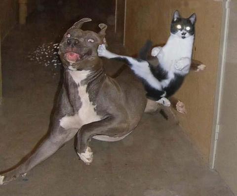 Les chats ! 24gccq10