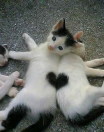 Les chats ! Chat-d10