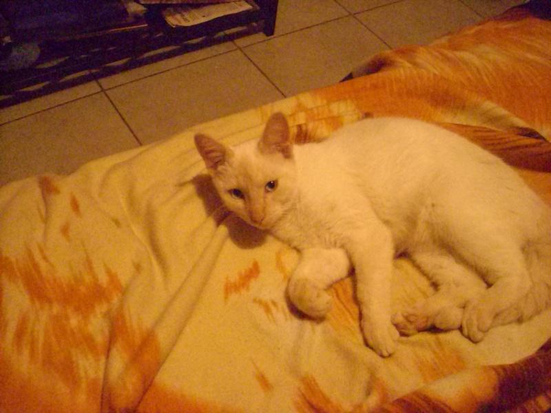 Les chats ! Dsci1710