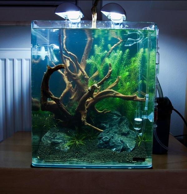mon futur aquarium 94931010