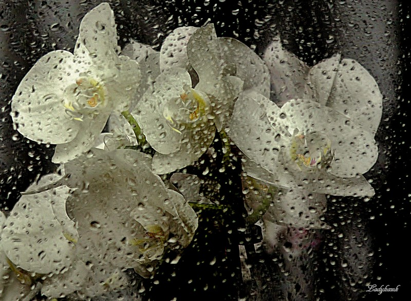 perles d'eau Img_4411