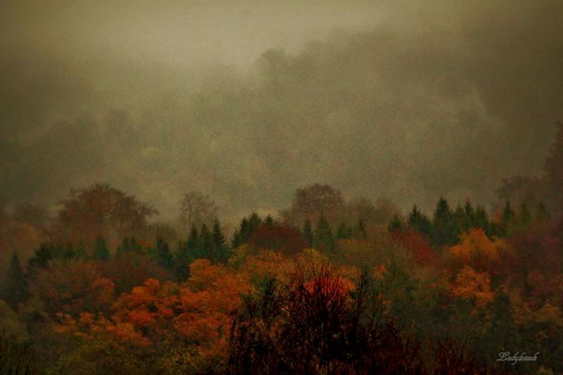 le paysage Img_5212