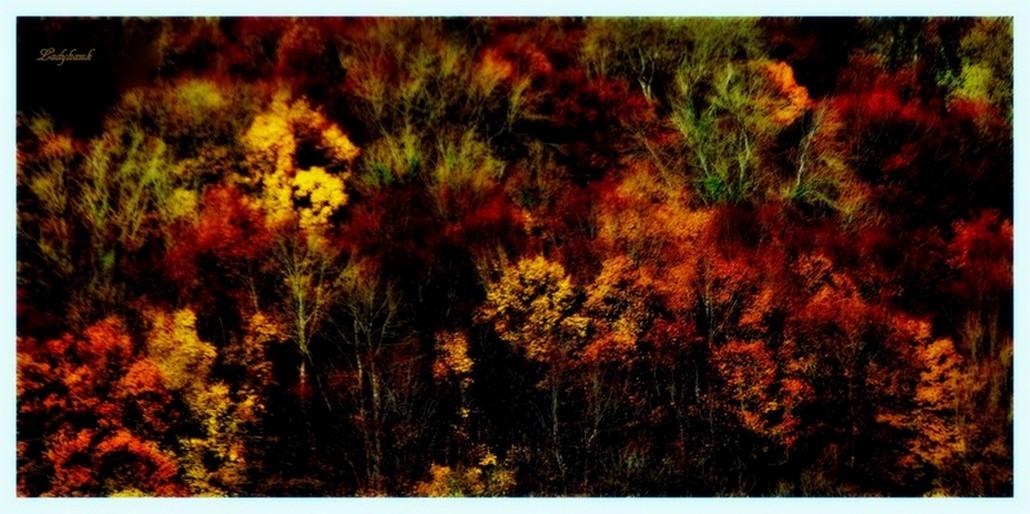 mon automne Img_5312