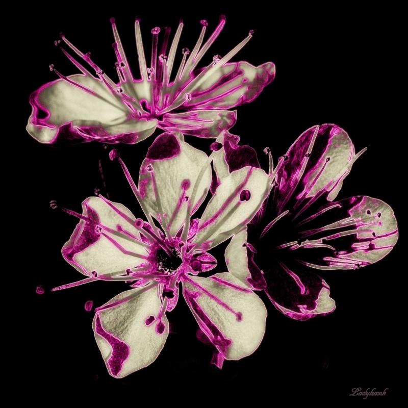 pink.. P4100010