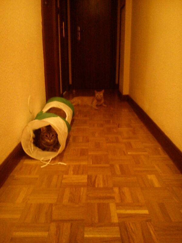 Rocky, disfruta ya de un hogar definitivo, junto a su tato felino Sugar. 011