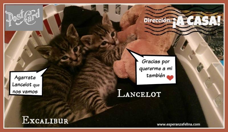 Excalibur y Lancelot han tenido la gran suerte de ser adoptados juntos. 0110