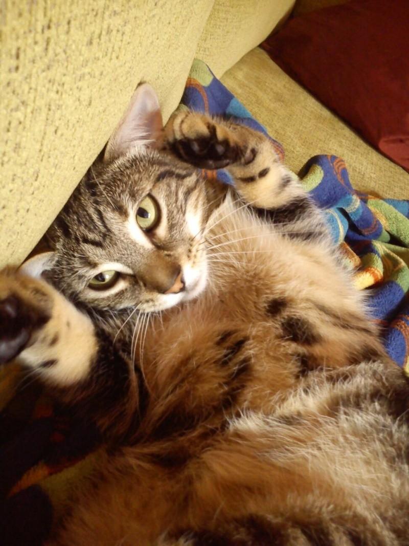 Rocky, disfruta ya de un hogar definitivo, junto a su tato felino Sugar. 110