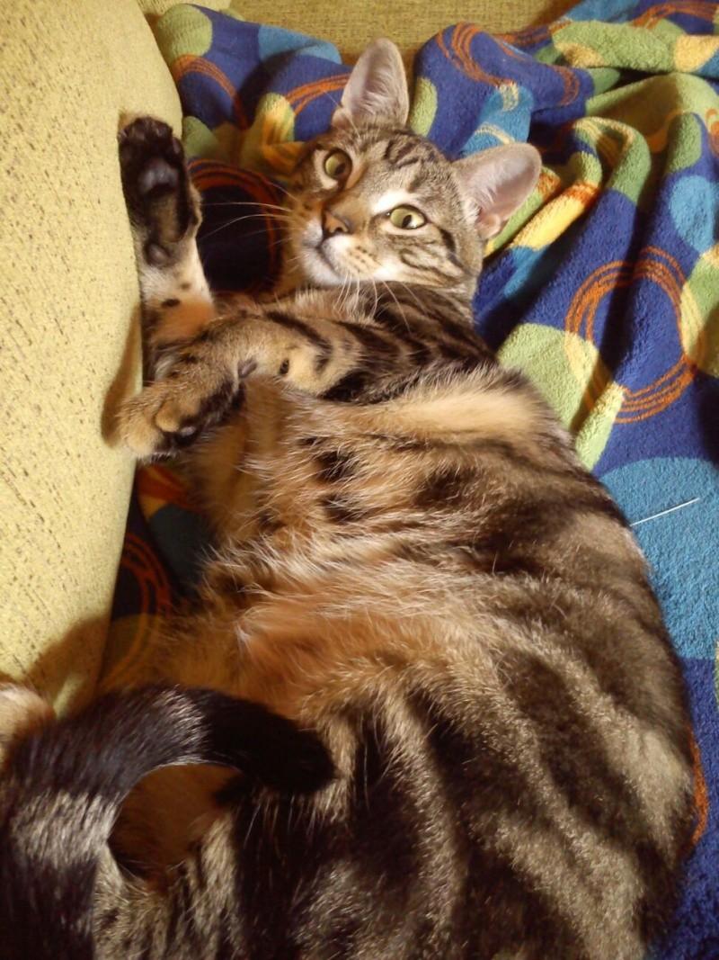 Rocky, disfruta ya de un hogar definitivo, junto a su tato felino Sugar. 1110