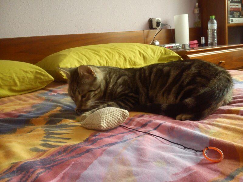 Rocky, disfruta ya de un hogar definitivo, junto a su tato felino Sugar. 111110