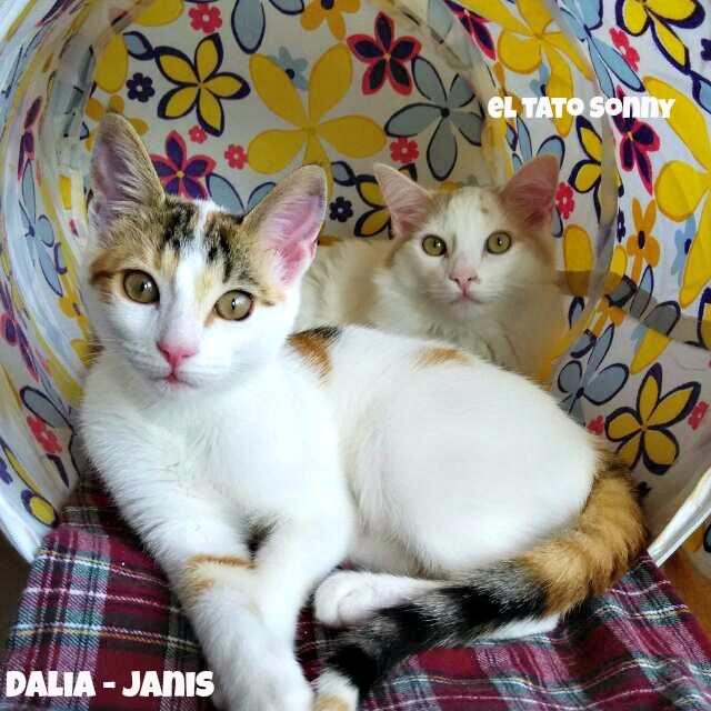 Dalia, ahora Janis feliz en su hogar con su tato Sonny. Dalia10