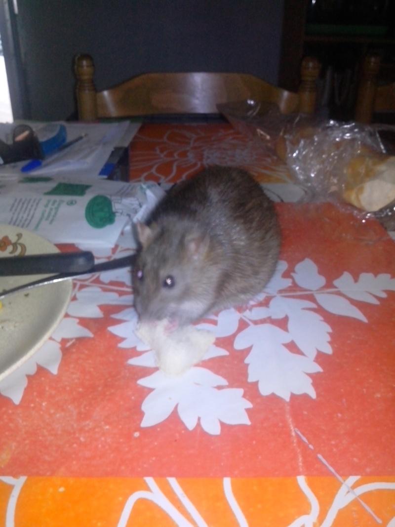 Ma petite chipie Img_2010