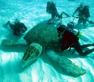 Algunos de los animales más grandes de la historia Archel10