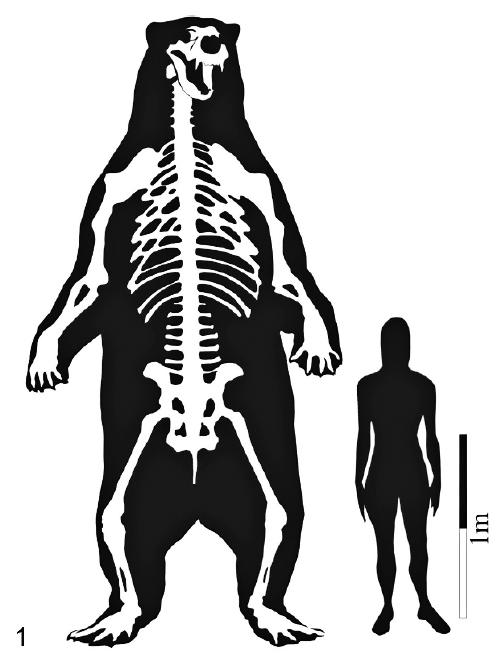 Algunos de los animales más grandes de la historia Arctot10