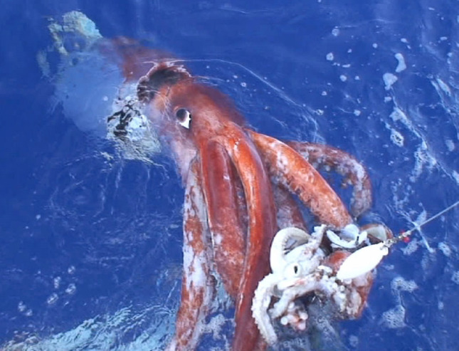 Algunos de los animales más grandes de la historia Calama10
