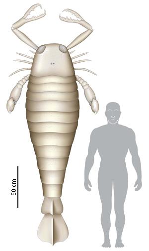 Algunos de los animales más grandes de la historia Jaekel10