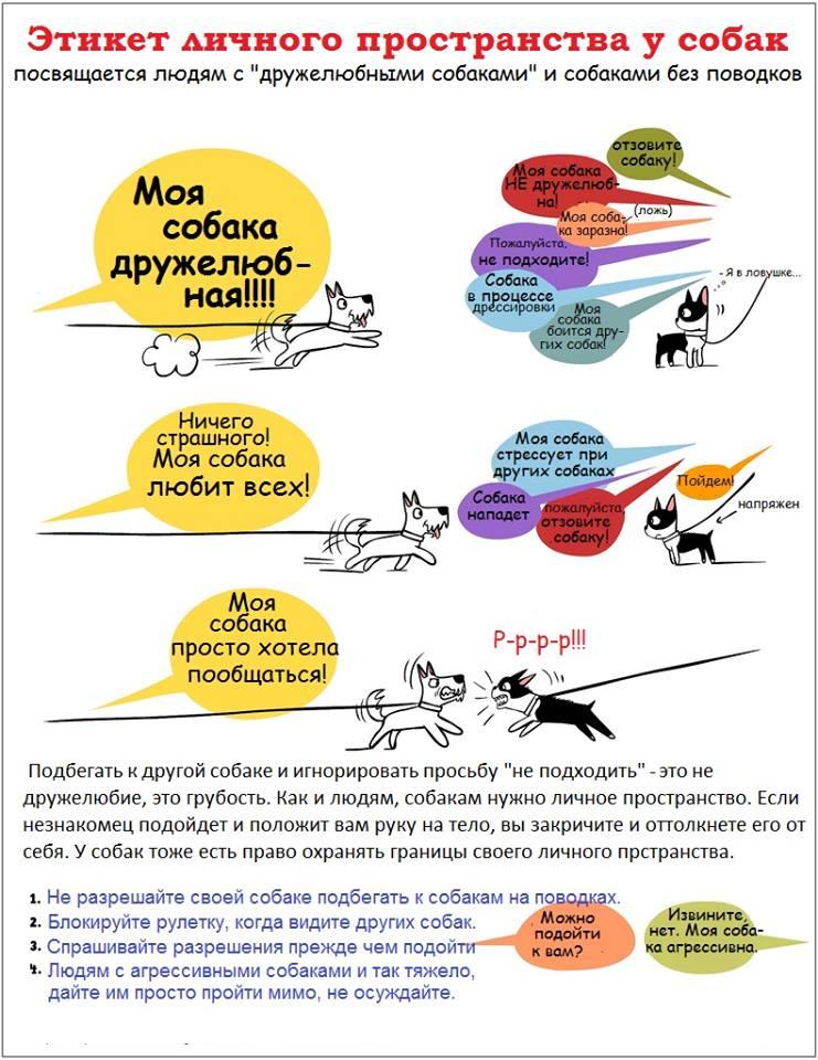 забавные истории и фотографии о животных. 10433110