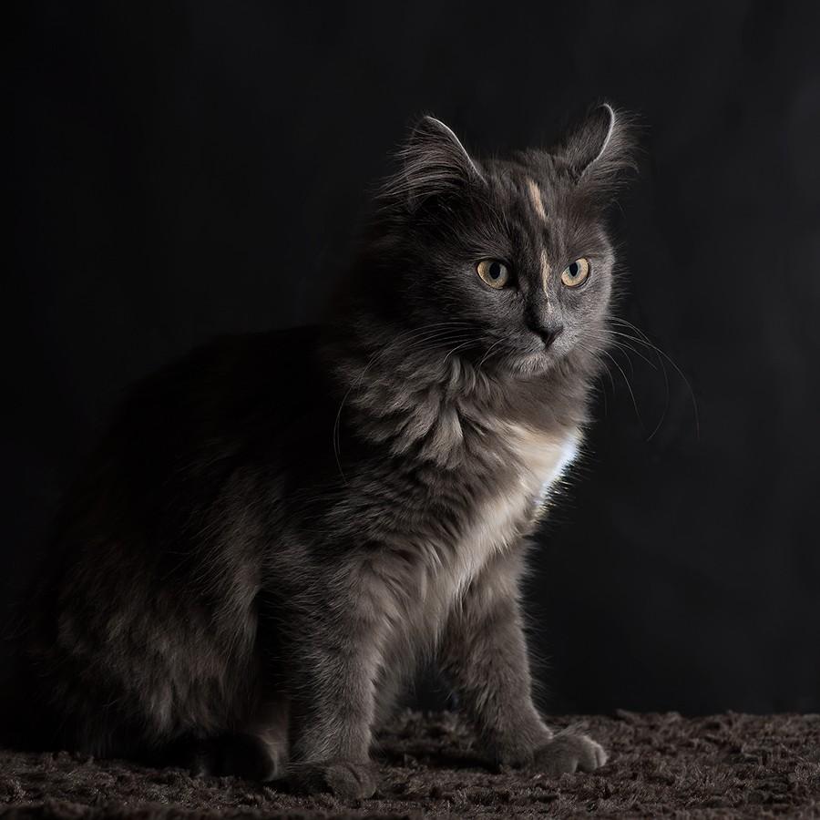Cat Woman Cat-wo10