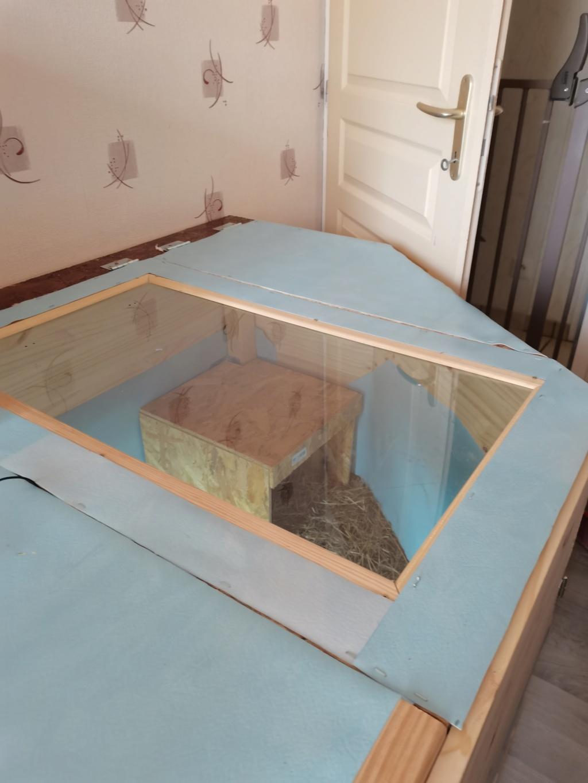 Idée terrarium Pardalis Nouvea10