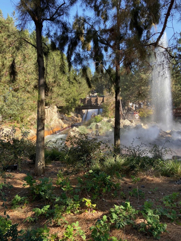 California Dream - Octobre 2019 - Disneyland Ressort à partir de la page 3  - Page 4 Img_0924