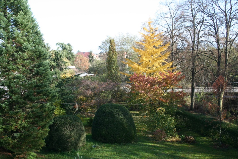 le jardin  - Page 4 Img_8011