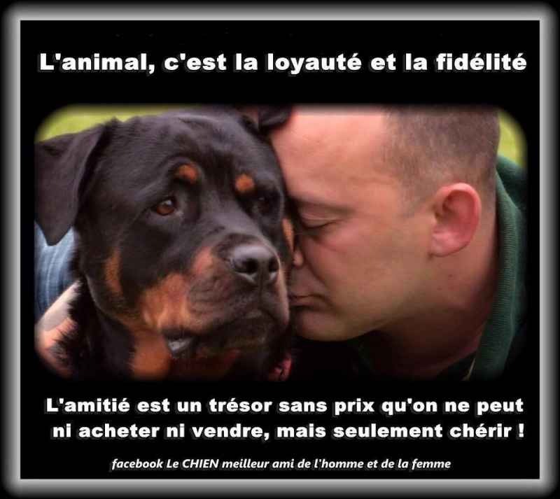 citations sur le chien 10428010
