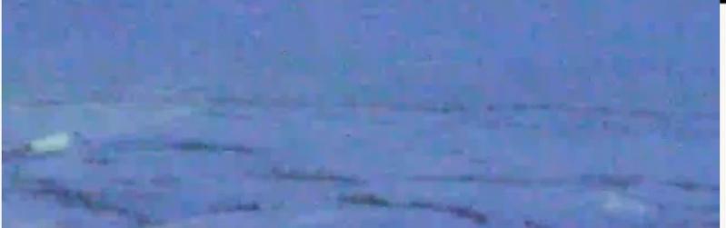 Wildtier-Livecams - Seite 4 Eisbau10