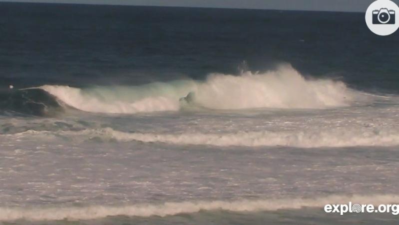 Wildtier-Livecams - Seite 4 Hawai110