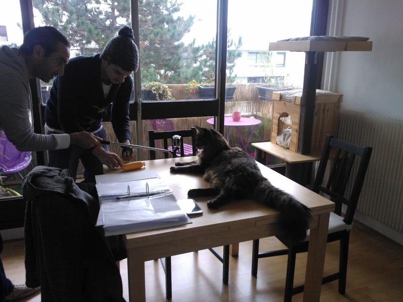 Casting Pub TV recherche chiens et chats - Page 9 Image38